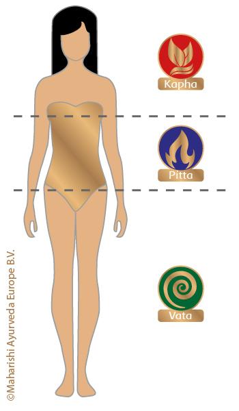 Verdeling van Vata, Pitta en Kapha in het lichaam