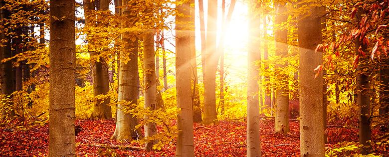 Zomers fris de herfst ingaan!